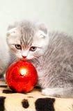 圣诞节装饰小猫 库存图片