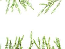 圣诞节装饰或装饰品在长方形框架形状放置了被隔绝的组成由绿色杉木分支和红色和绿色藤茎  免版税库存照片