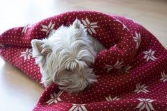 圣诞节装饰狗 免版税库存照片