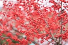 圣诞节装饰红色莓果 免版税库存图片