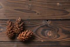 圣诞节装饰:杉木开花锥体 库存照片