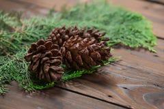 圣诞节装饰:杉木开花锥体 库存图片