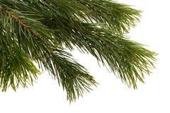 圣诞节详细资料结构树 免版税图库摄影
