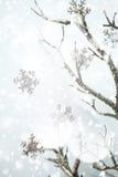 圣诞节边界、银色分支和金属雪花 免版税图库摄影