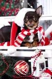 圣诞节达克斯猎犬小狗 库存图片