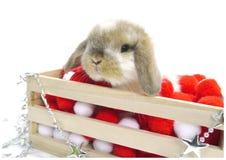 圣诞节逗人喜爱的兔子deco 免版税库存照片
