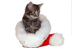 圣诞节逗人喜爱的小猫 免版税图库摄影