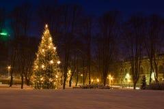 圣诞节里加结构树 图库摄影
