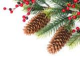 圣诞节锥体查出的结构树白色 免版税库存照片