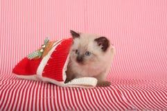 圣诞节隐藏的小猫储存 库存照片
