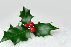 圣诞节霍莉叶子用在雪的红色莓果 免版税库存图片