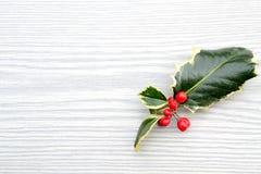 圣诞节霍莉 图库摄影