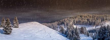 圣诞节风景,与冷杉木的降雪的冬天场面,雪落, 免版税库存图片