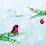 圣诞节鸟 在分支的传染媒介红腹灰雀 库存图片
