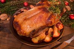 圣诞节鸭子 库存照片