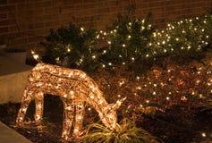圣诞节鹿点燃室外 库存照片