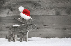 圣诞节麋或驯鹿在木背景 库存照片