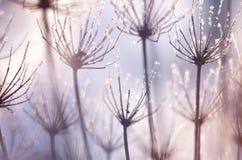 圣诞节,与冷淡的干燥植物的冬天背景反对闪耀的bokeh 免版税图库摄影