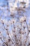 圣诞节,与冷淡的干燥植物的冬天背景反对闪耀的bokeh 图库摄影