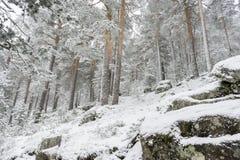 圣诞节,多雪的杉木美好的风景与雾,口岸的  库存照片