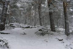 圣诞节,多雪的杉木美好的风景与雾,口岸的  库存图片