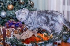 圣诞节,新年欢乐看法  库存照片