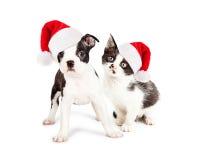 圣诞节黑白小狗和小猫 免版税库存照片