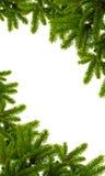 圣诞节绿色植物 库存照片