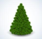 圣诞节绿色结构树 可实现轻快优雅的例证 免版税图库摄影