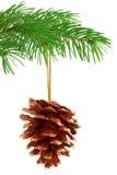 圣诞节pinecone 免版税库存照片