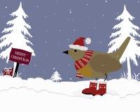 圣诞节Robin 免版税库存图片