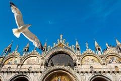 圣马克` s大教堂和飞行海鸥在威尼斯 库存照片