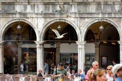 圣马克` s正方形在威尼斯,意大利 免版税库存图片