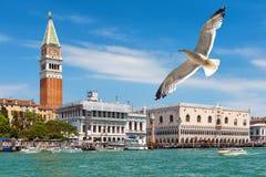 圣马克` s正方形在威尼斯 库存照片