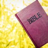 圣经关闭。 免版税图库摄影