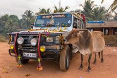 圣洁印地安母牛在Gokarna市,印度吃从印度香客汽车的花装饰 库存图片
