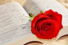 圣经和上升了,爱概念 库存照片