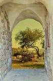 圣经的小山小山临近老耶路撒冷 免版税库存图片