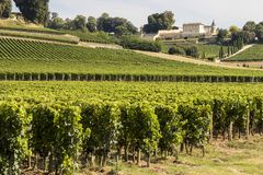 圣Emilion的,法国葡萄园 免版税库存照片