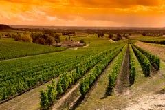 圣Emilion葡萄园日出葡萄园,红葡萄酒葡萄园 免版税库存图片