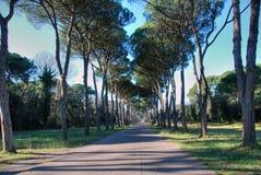 圣Rossore公园,一条路在托斯卡纳 库存图片