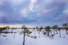 在Ķemeri沼泽的冬天  免版税库存图片