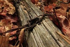 在一下落的fencepost的生锈的老铁丝网 免版税库存图片