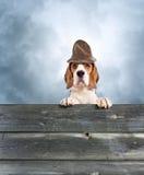 在一个不可思议的帽子的狗 免版税库存照片