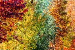 在一个不同的颜色颜色变化概念的五颜六色的秋天树 库存图片