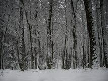 在一个中欧城市附近的森林在冬天季节的第一降雪以后 免版税库存图片