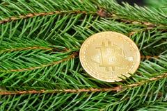 在一个云杉的分支的硬币Bitcoin 特写镜头 到达天空的企业概念金黄回归键所有权 库存照片
