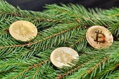 在一个云杉的分支的硬币Bitcoin 特写镜头 到达天空的企业概念金黄回归键所有权 图库摄影
