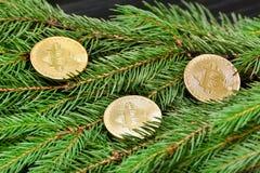 在一个云杉的分支的硬币Bitcoin 特写镜头 到达天空的企业概念金黄回归键所有权 免版税库存图片