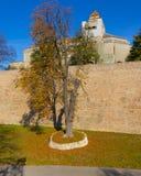 在一个五颜六色的砖墙旁边的美妙的树 库存图片